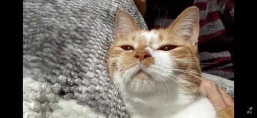 うっとりする猫
