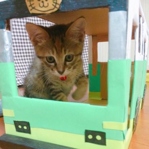 段ボールバスに入る子猫