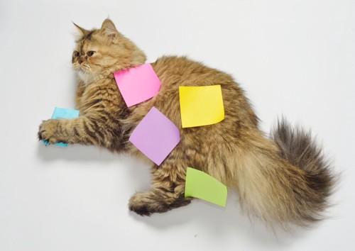 ポストイットをつけた猫