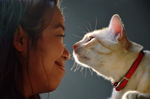 向き合う猫と人