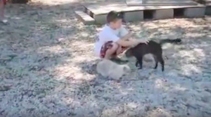 男の子に甘える猫