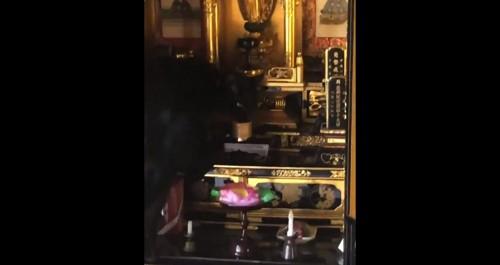 仏壇にいる猫