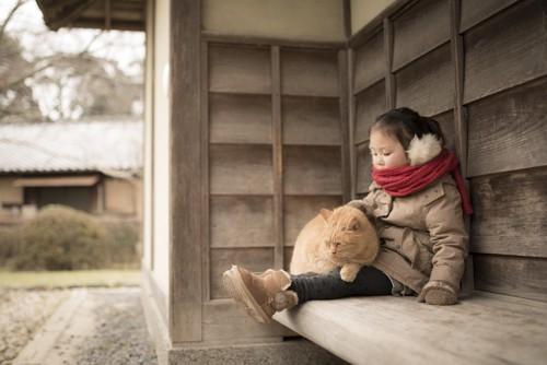 女の子の膝に乗る薄茶の猫