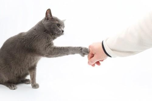 飼い主の手にタッチする猫