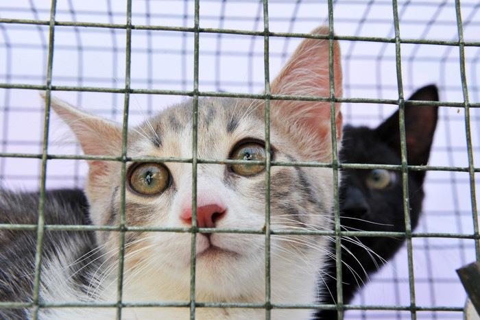ケージに入っている猫