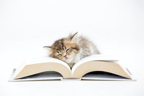 本の上で寝ている子猫