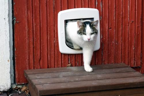 キャットドアから出てくる猫
