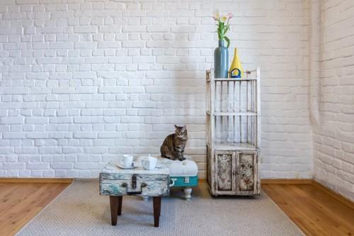 部屋に佇む猫