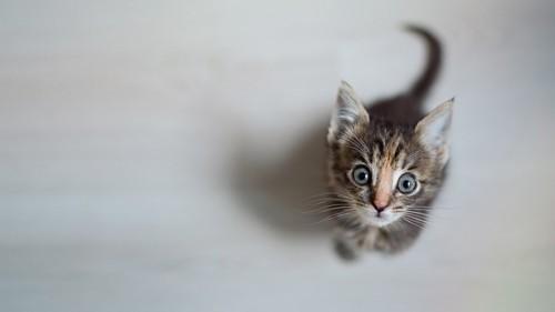 何かを待っている子猫