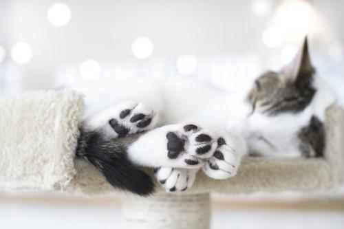 キャットタワーで眠る黒い肉球の猫