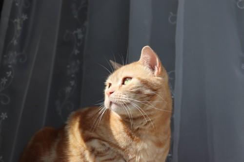 日差しを浴びる猫