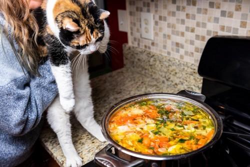 人間のご飯を狙う猫