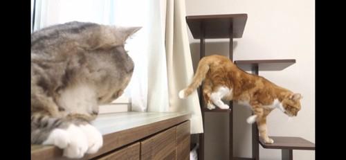 どこかに行く猫
