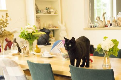 テーブルに登る猫