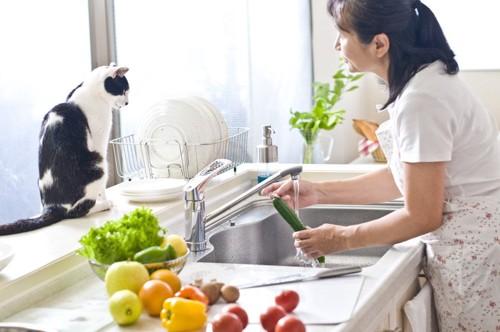 料理をする人と猫