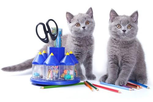 ダイソーの商品と二匹の子猫