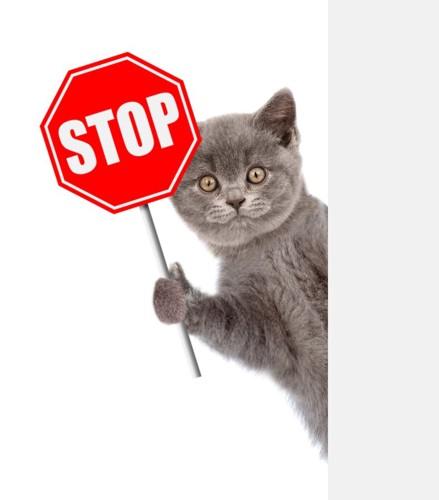 STOPと猫