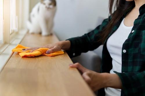 掃除をする人と猫