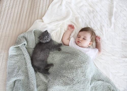赤ちゃんと一緒の布団で横になる猫