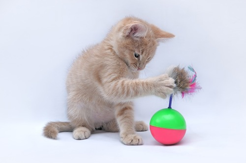 おもちゃで一人遊びをしている猫