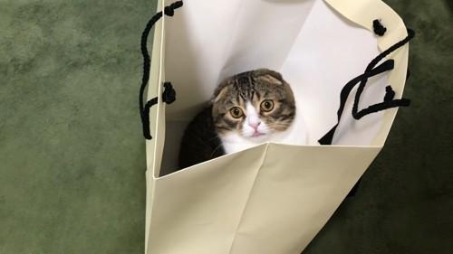 袋の中から見上げる猫