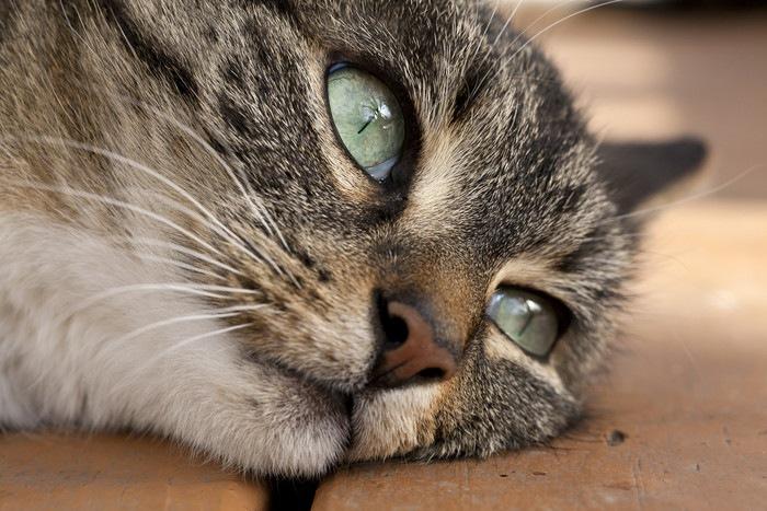 見ている猫