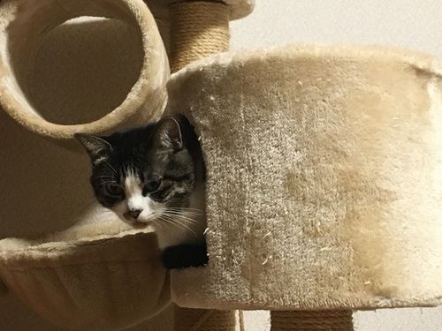 家に住む猫