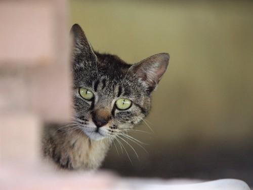 顔をだしてこちらを覗く猫