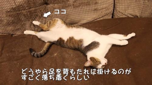 後足をソファーにかける猫