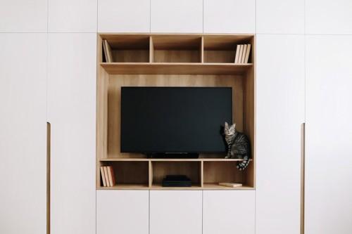 テレビの横に座る猫