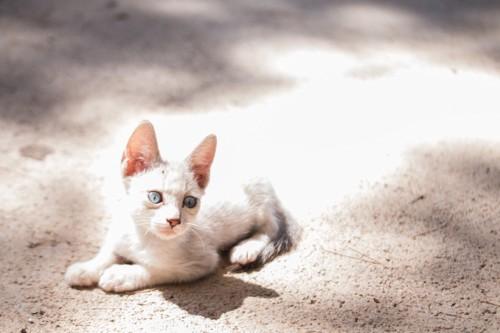 箱座りしている子猫