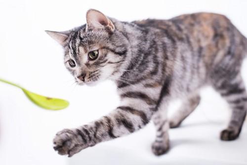 楽しく遊ぶ猫