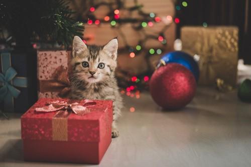 プレゼントと並ぶ猫