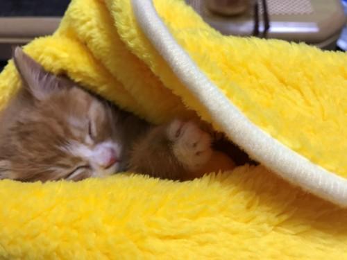 #爆睡する猫#