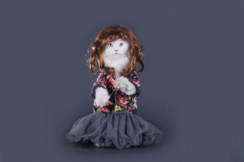 女の子っぽいかつらを被る猫