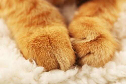 猫の手とふわふわの布