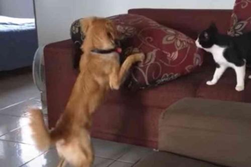犬に追われる
