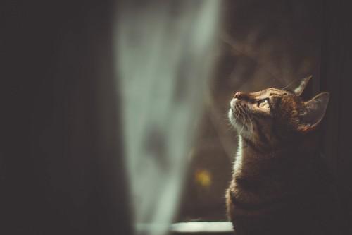 暗い部屋で上を見つめる猫