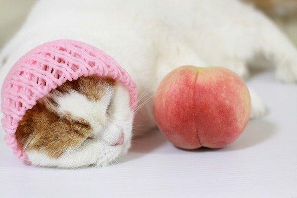 桃のネットをかぶって桃の横で眠る猫