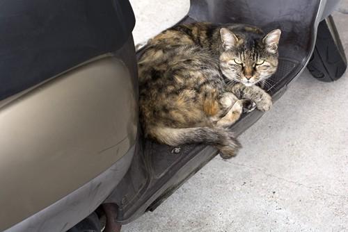 車内にいるサビ猫