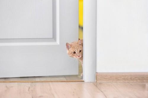 ドアから顔をのぞかせる猫