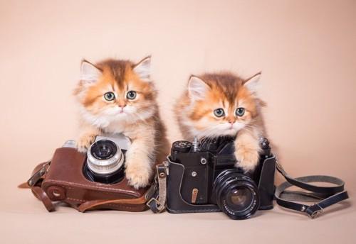 カメラと子猫
