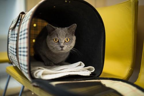 キャリーバックに入っている猫