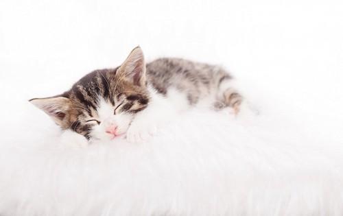 ふかふかの毛布で眠る子猫
