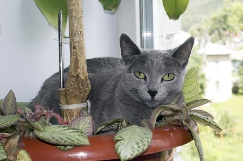 ボルシチを食べる猫