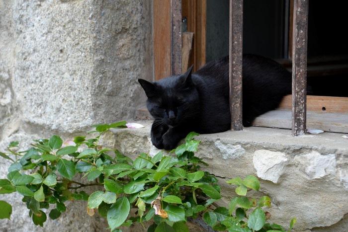 154339016 黒猫