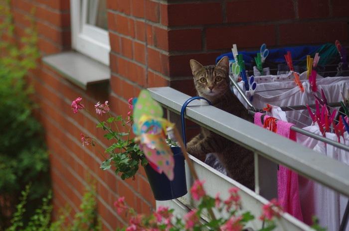 ベランダからこちらを見る猫
