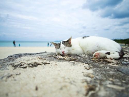 竹富島の海辺で寝ている猫