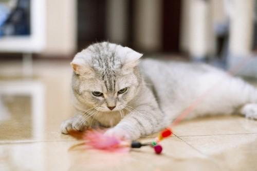おもちゃをねらう猫