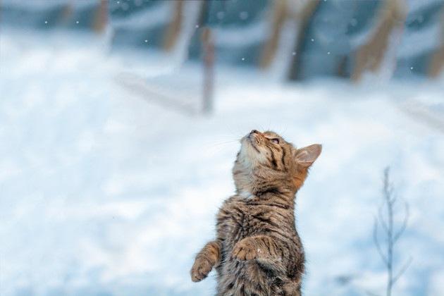 雪の中で2本足で立つ子猫